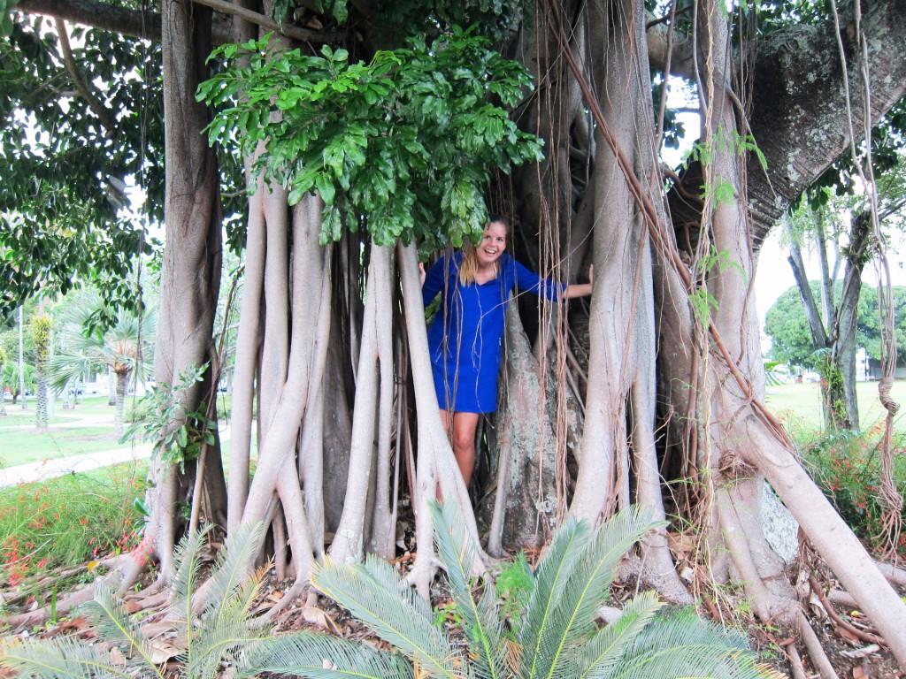 En obligatorisk turistbild i träden