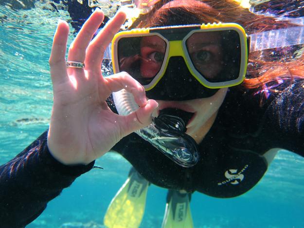Snorkling på Barriärrevet med både hajar och sköldpadda!