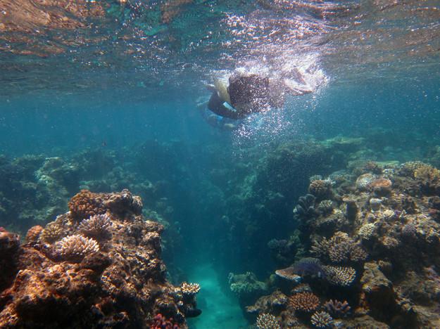 Barriärrevet Australien 2
