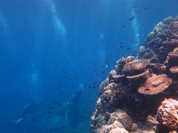 Barriärrevet Australien