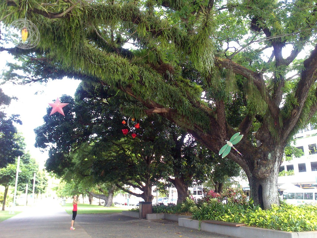 Stort träd i Cairns