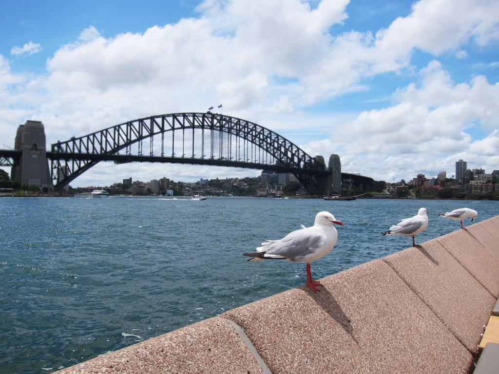 Blogg Sydney 3