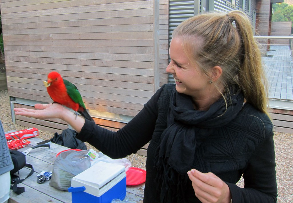 Fick sällskap av papegojor under matlagningen!